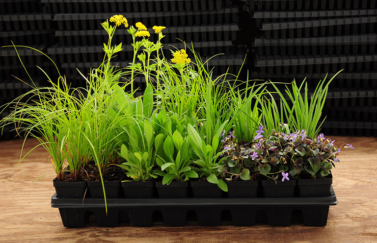 32 plant tray of native plants