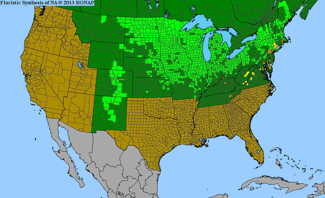 Range Map for Canada Anemone