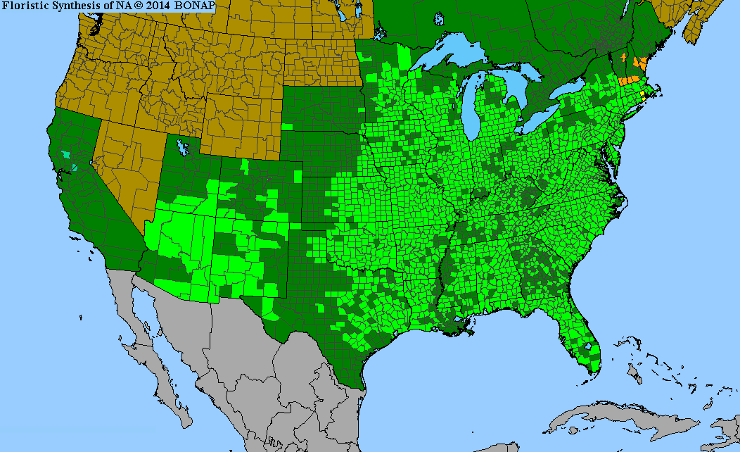 Range Map for Butterflyweed for Clay