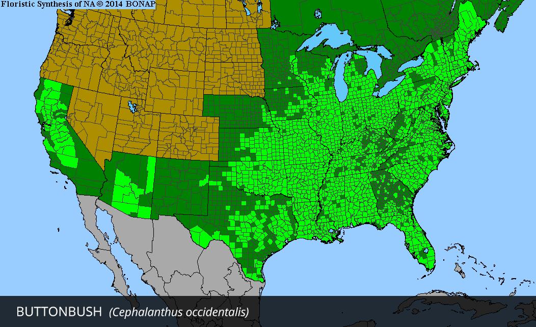 Range Map for Buttonbush