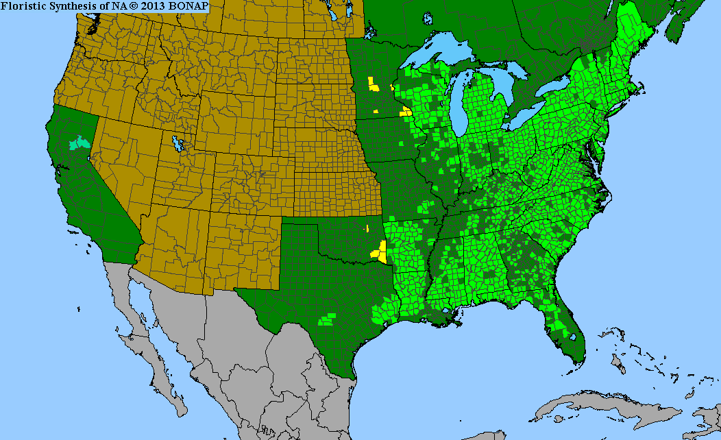 Range Map for American Witch Hazel