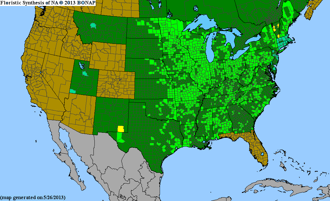 Range Map for Obedient Plant