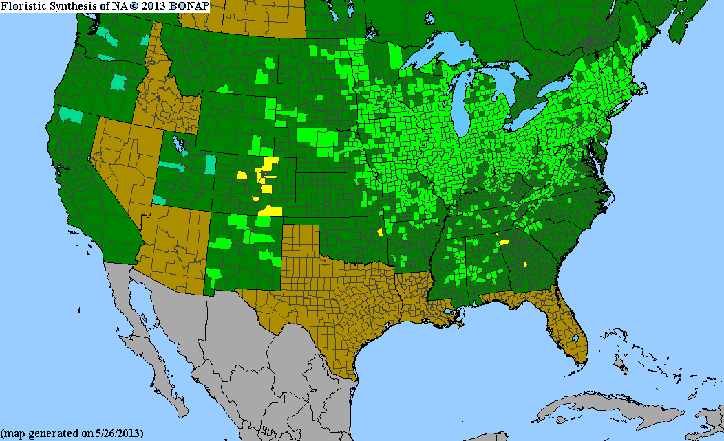 Range Map for New England Aster