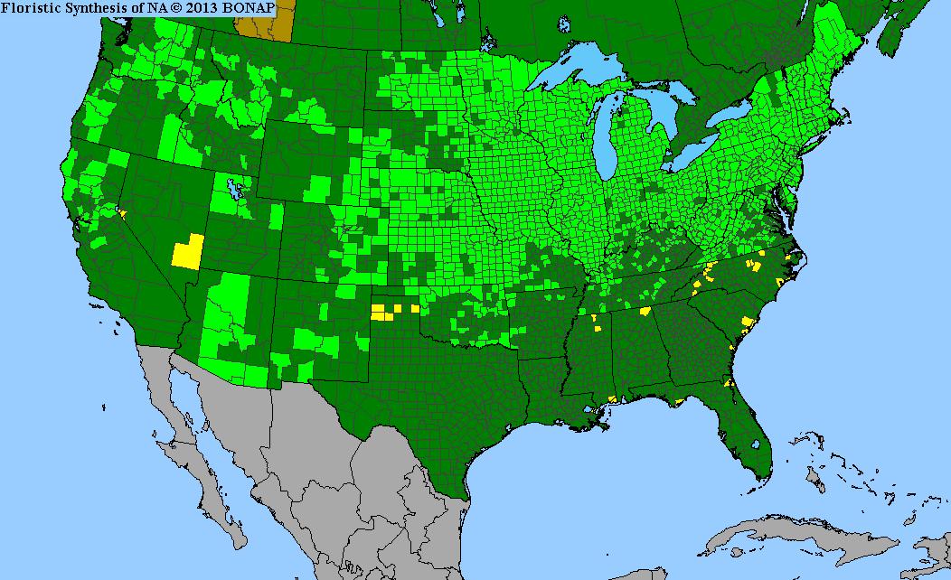 Range Map for Blue Vervain