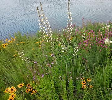 diverse habitat seed mix