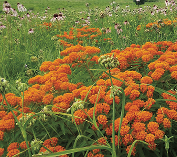 native seed mix for dry sandy soil
