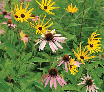 partial shade native seed mix
