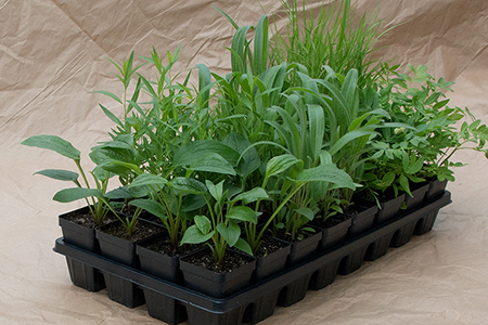 Custom Plant Kit of 32 Plants