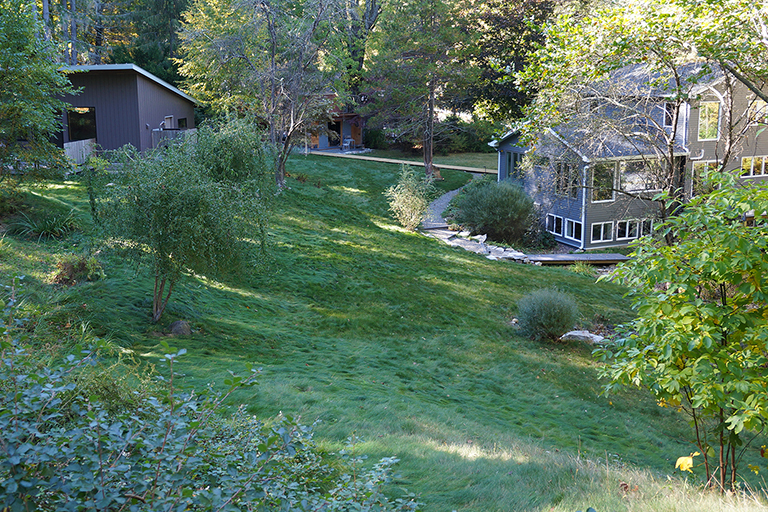 no mow lawn on a hillside