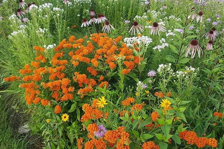 garden full of native plants