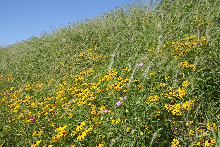 pollinator garden with bumble bees on monarda