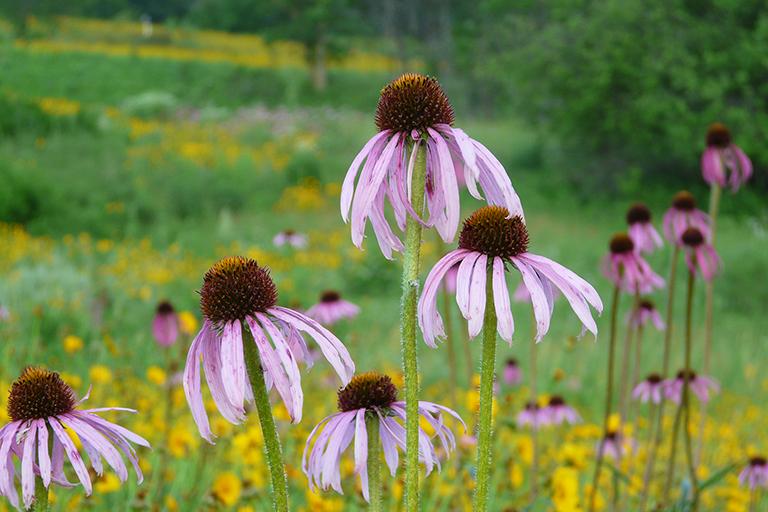 native landscape restoration seed mix