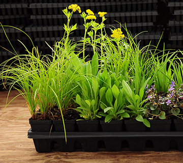 native plants in 32-plant tray