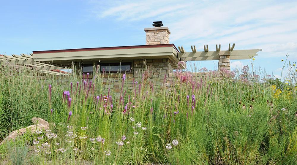 residential prairie garden
