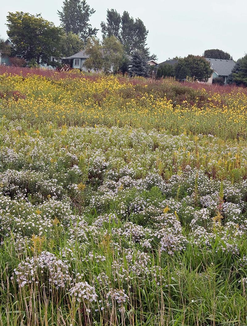 Bioretention area
