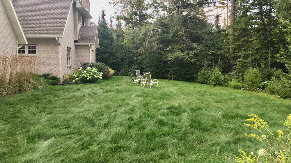 no mow lawn in door county wisconsin