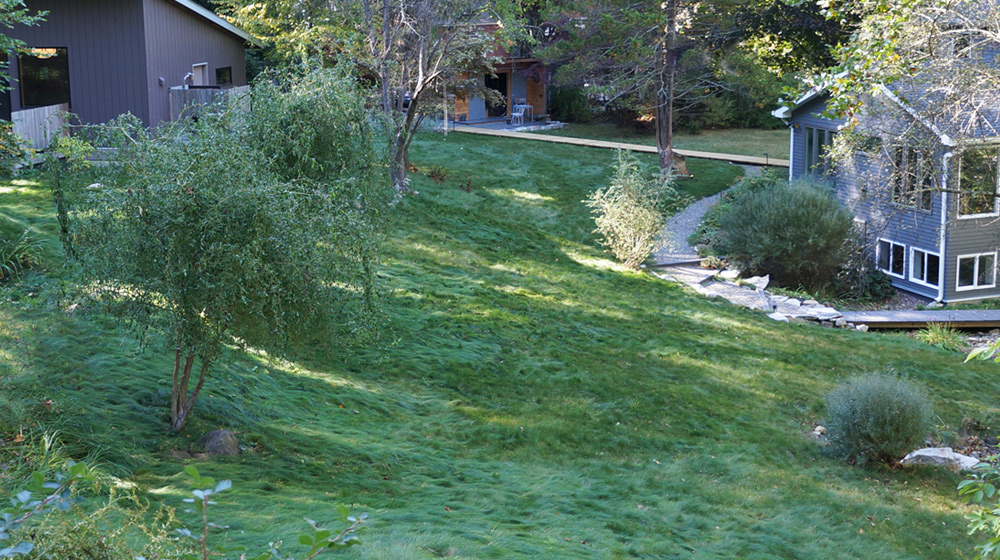 Well established no mow lawn hillside application