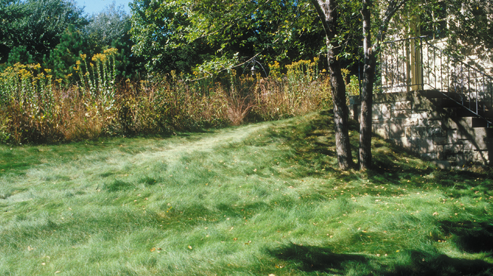 no mow lawn in the fall